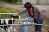 MdB Caren Lay zu Besuch in der Agrargenossenschaft 2012 - Bild 4